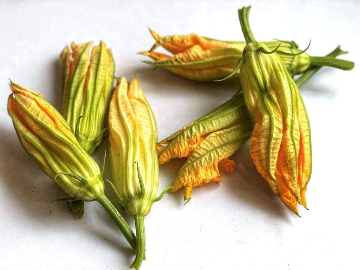 smażone kwiaty cukinii 3