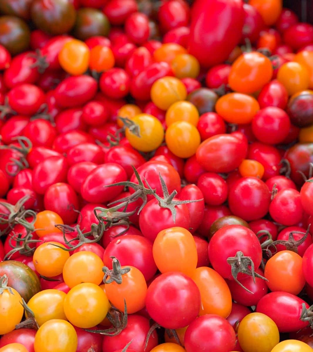 pomidorki koktajlowe mix kolorów